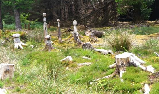 Mushroom trees!