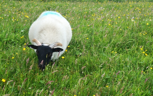 A sheep we saw on the way